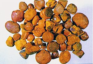 牛黄 Ox Gallstones